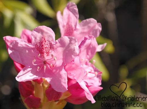 botaniskhage13