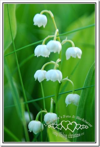 blomst10