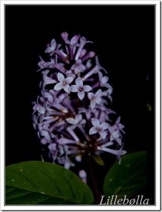 blomst-4