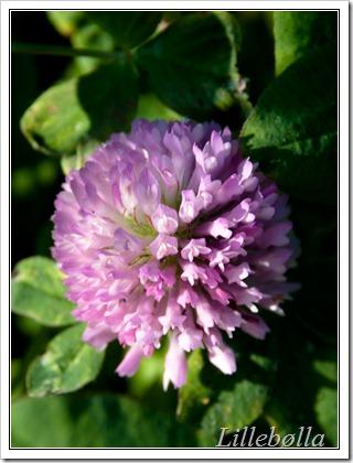 blomst-6