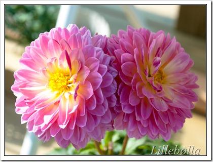 blomst-7