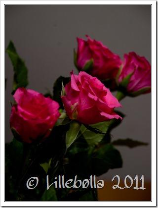 roser..